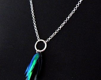 Sternocera aequisignata beetle elytra wings necklace, gem of nature