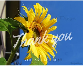 2 Thank you Cards Sunflower Digital 5.5x4.25 In