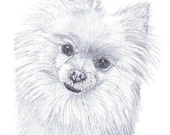 POMERANIAN dog Limited Edition art drawing print signed by UK artist