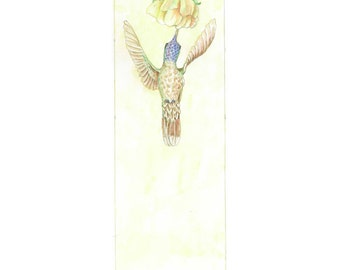 Hummingbird II, Nature Art, Garden Print, Illustration, Watercolor, Limited Edition