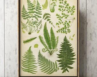 Fern poster, fern print, fern chart study poster, fern art, botanical art, botanical print, botanical chart, botanical A3 poster