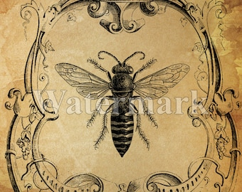 SALE Queen Bee instant Digital Download - Printable Bee Art Print - Collage Antique Print - Transfer Pillow Paper Supply - Save The Bees