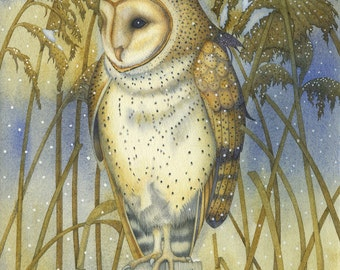 The Tender Owl Giclee print.