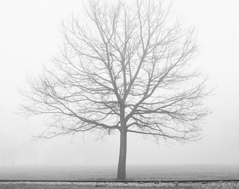 Autumn Tree Photo Print - Black and White Print - Autumn Landscape Photo - Modern Rustic Tree in Fog - Nature Photo - Dining Room Decor