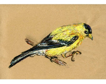 5x7 print Goldfinch - Bird art mixed media drawing