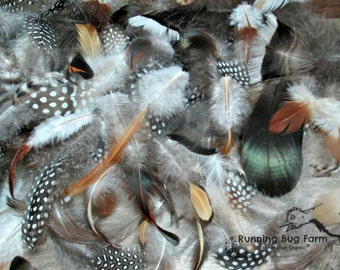 """Mixed Feathers Natural Guinea Feathers Turkey Feathers Chicken Feathers Duck Feather Assortment Real Loose Eco Plumes 25 @ 1.5"""" - 4.5"""" / 47"""