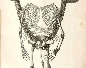 Conjoined Twins Skeleton Notecard Halloween Handmade Vintage Image