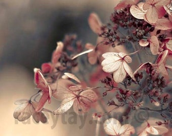 Pink Flower Photo, Gray, Pink, Baby Girl Nursery Decor, Shabby Chic, Hydrangea, Flower Photography
