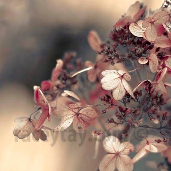 Pink Flower Photo, Gray, Pink, Baby Girl Nursery Decor, Shabby Chic, Hydrangea, Flower Photography