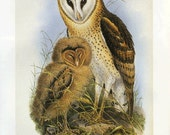 Baby Owl Art  Print Gould  Book Plate Sale Buy 3, get 1 Free
