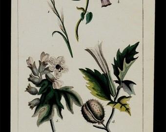 1833 Antique print of poisonous plants,  hand colored engraving