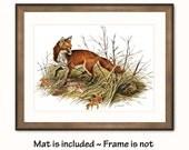 Fox Art Print w/Mat -- Vintage Animal Artwork -- Autumn Fox, Foraging