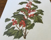 Vintage Color Lithograph Print- American Holly- Wildflower Series