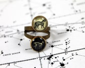 Schrödinger's Cat Double Ring