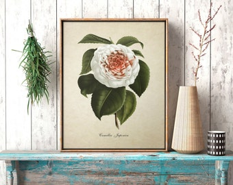 Botanical Print Red and White Camellia Flower Print Home Decor Antique Natural History Camellia Print Reproduction FL040