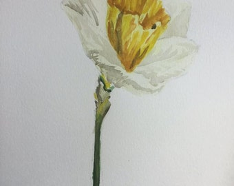 Original Watercolor Daffodil