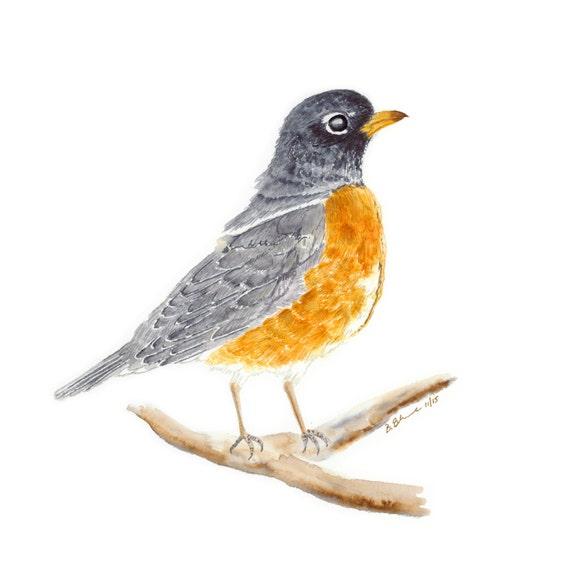 american robin bird drawing hot girls wallpaper
