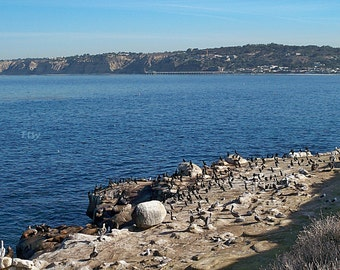 Instant Download Ocean beach nature photo picture birds sea lions in San Diego California Printable Art print Stock photography Stock photo