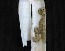 East Coast Jackknife Razor Shells - Natural Finds - Cape May Diamonds - Long Shells - Beachcomber - Groovy Seashells - Upcycle - Collect