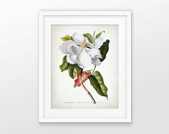 Magnolia Flower Print - White Flower Illustration - Botanical Art - Digital Art - Printable Art - Single Print #1618 - INSTANT DOWNLOAD