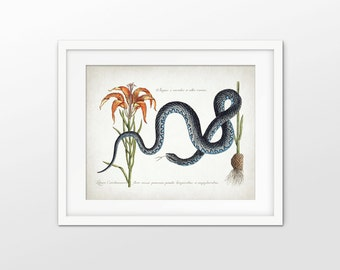 Snake Art Print - Antique Snake Illustration Print - Snake Decor - Reptile Art - Single Print #1661 - INSTANT DOWNLOAD