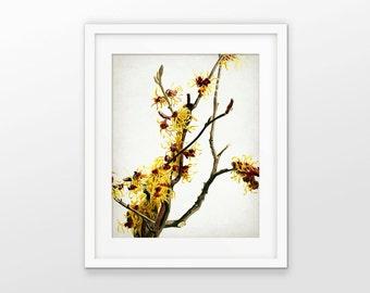 Yellow Flowers Art Print - Yellow Flower Decor - Tree Blossom - Flower Print - Single Print #1774 - INSTANT DOWNLOAD