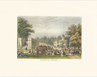 Victorian London Zoological Gardens Zoo elephant animals vintage print coloured engraving 7 x 9.25 inches