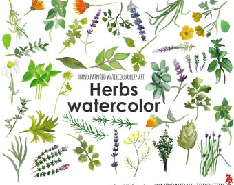 Herbs clip art, hand painted watercolor clip art, digital flowers, chives, basilic, parseley and other herbs, 55 PNG  files (5240)