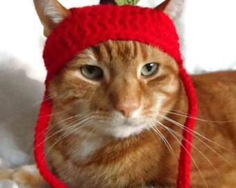 Crochet Apple Cat Hat, Hats for Cats, Teachers Pet Hat, Pet Hat, Novelty Cat Hat, Crochet Cat Hat.
