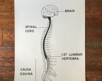The Cauda Equina Courtroom Anatomy Chart