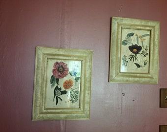 Pair of Vintage Framed Botanical Prints