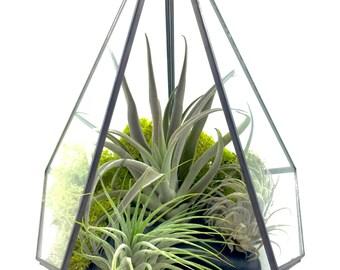 "Large Geometric ""Tear Drop"" Terrarium Kit, Large Terrarium, River Stones, Chartreuse Moss"