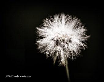 Dandelion Art, Dandelion Print, Dandelion Photography, Black and White Art, Dandelion Picture, Modern Art, Bedroom Decor, Nature Photography