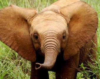 Kenya print - Kenya Photography - Kenya decor - Safari print - Elephant print - Elephant decor - Elephant photo - Baby Elephant print - Wall