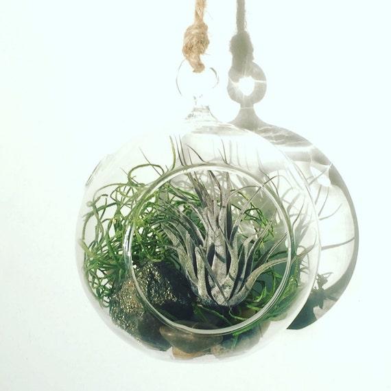 Gemstone & Airplant Terrarium