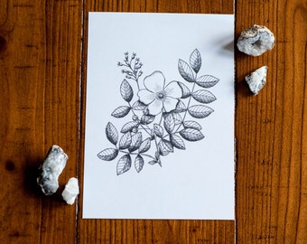 Wild Rose Art Print Botanical Pen and Ink Floral Drawing