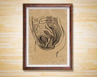 Female anatomy print Vintage decor Medical poster
