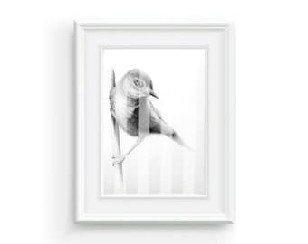 Bird, Nature, Black, White, Gray, Stripe, Art Print, Digital Print, Print