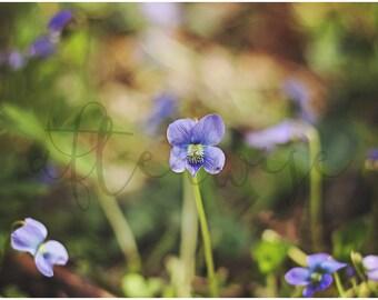 Flower Photography. Flower Print. Purple Flower Photo. Nature Print. Nature Photography. Fine Art Photography.