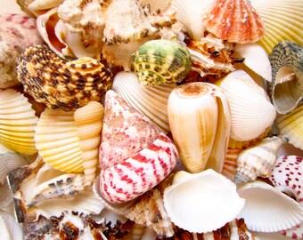 1 Pound Sea Shell Mix- Assorted Sea Shells-Sea Shells Bulk-Sea Shell Mix-Beach Wedding Decor-Sea Shells Home Decor-Multi Color Sea Shell Mix