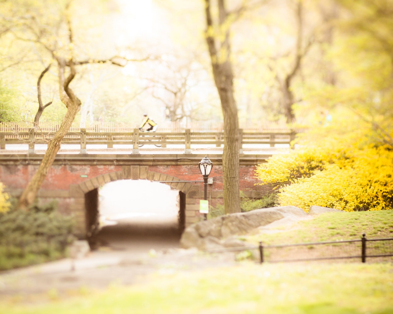 Yellow Wall Art, Nature Photography, Central Park Photo, Yellow Wall ...
