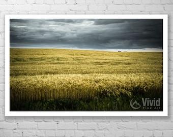 Landscape photograph, framed art print, prairie wall art, dark skies, yellow and black, ominous sky, office wall art, grassland photography