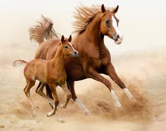 """4.25"""" x 4.25 """" Ceramic Accent Tile-Horses"""