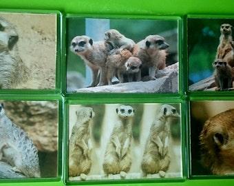 Meerkat Fridge Magnet Job Lot, Set of 6/ Refrigerator/ Kitchen