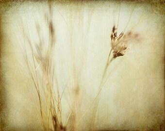 Botanical photograph nature print abstract photography macro artwork brown tan beige bokeh fine art prints