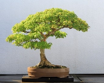 DIY Bonsai Trees: Guide to Growing, Trimming, Sculpting, Planting, Pruning How to Tips Re-potting Learn Gardening Indoor, Outdoor eBooks PDF