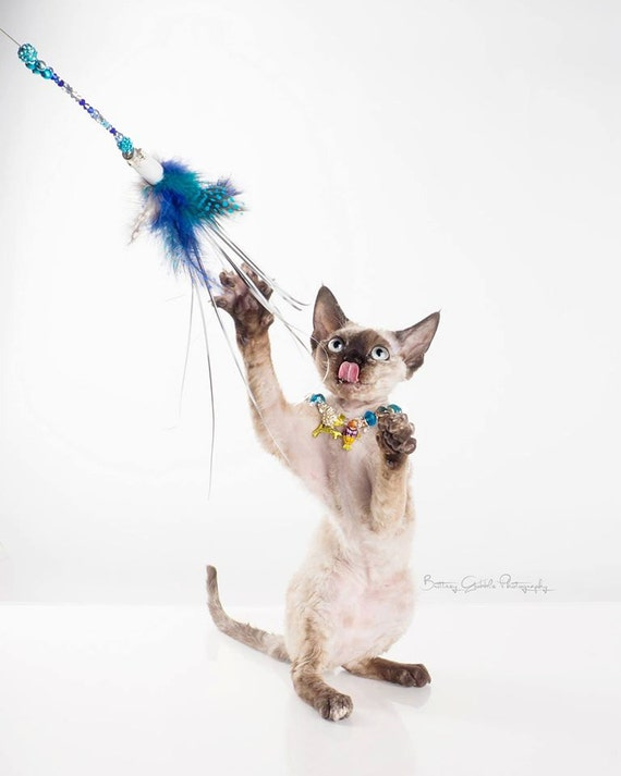 Cat teaser cat toy cat feather toy cat wand kitty toy for Cat wand toys