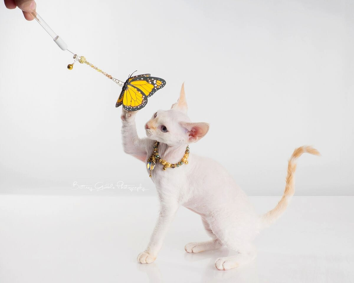 Cat Toys Cat Butterfly Toy Cat Wand Kitty Toy Catnip