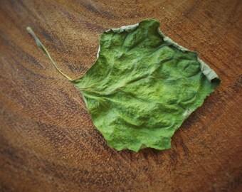 Dried Patchouli Leaves | Cut & Sifted Organic Herb | Grown in Hawaii | Bulk Loose Herbs | 1 oz