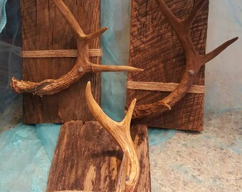 Genuine barnwood picture frames embellished with genuine antler sheds!